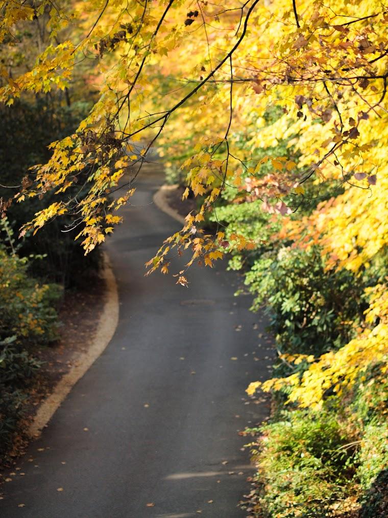 Bittersweet Colours, LWG, fall