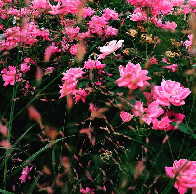 Bittersweet Colours Instagram